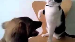 猫のアポロとレオンベルガーのグランデ(4ヶ月)がじゃれあっています。