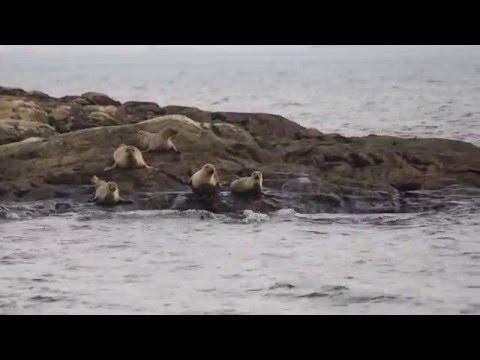 Seals in Gothenburg archipelago