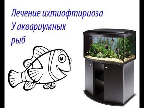 лечение ихтиофтириоза (манки) у аквариумных рыб