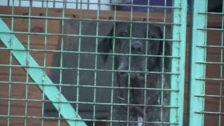Бывшие домашние собаки в приюте