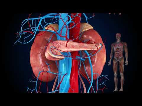 Diabetes und Folgeerkrankungen