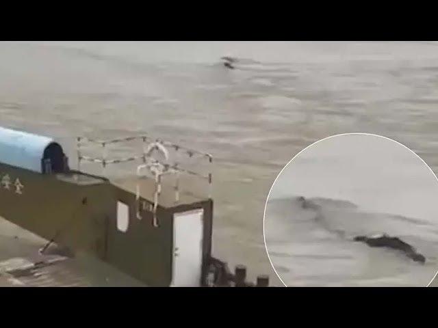 Un sorprendente video muestra un monstruo gigante en un río de China