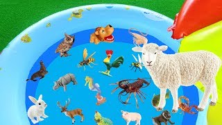 Learn Animal Names for Children - Learn Words in English | Toys for Kids | Lum Sum Kids