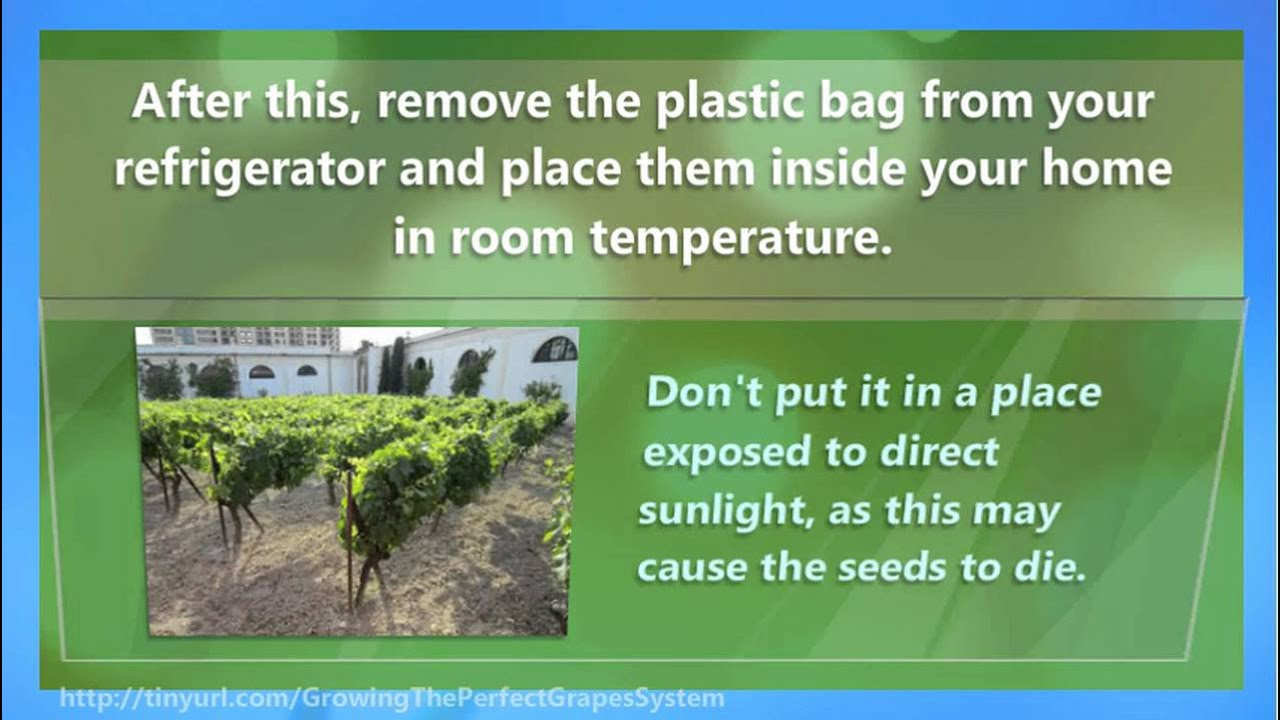 the best learning advice on how to grow grapes in your backyard or