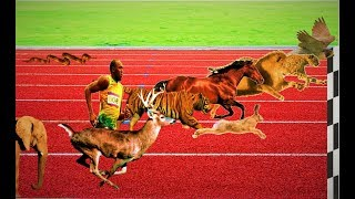 Race of Animals