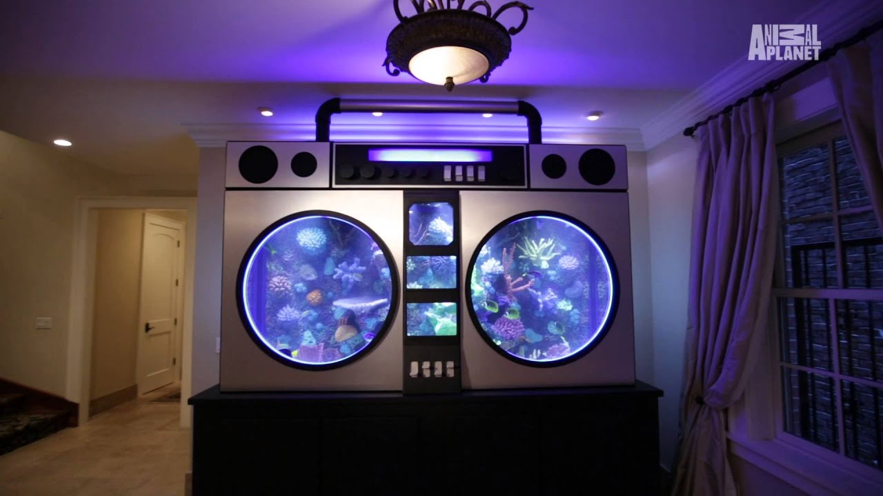 Used aquarium fish tank for sale - 30 Unbelievable Fish Tanks That Makes You Wish Were A