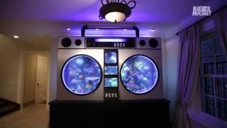 jimmy butler s 6000 lb boombox fish tank