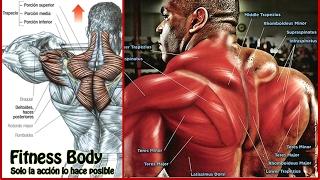 6 Ejercicios para Desarrollar el Trapecio | Fitness Body