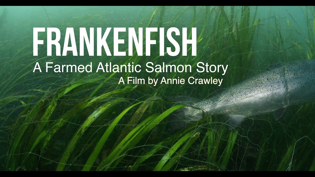 Image result for Frankenfish