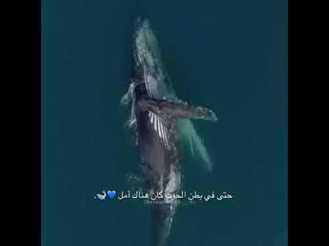 بطن الحوت