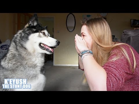 Train A Stubborn Husky To Do The Snoot Challenge