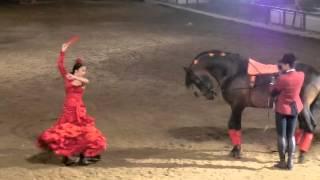 Horse Sevillanas, Cordoba, Spain 2014