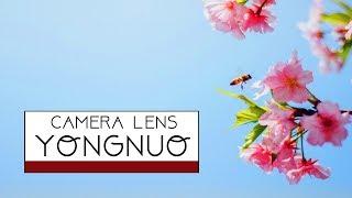 카메라 단렌즈 추천! 중국 용누 35mm (YONGNU…