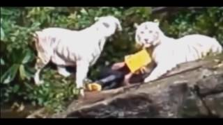 ЖЕСТЬ! Нападения животных на людей  Подборка 18+ ч 2
