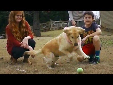 Turkey rescue dogs thriving in U.S.