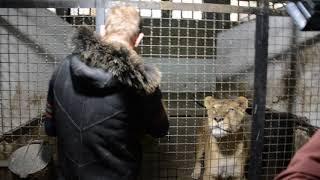 Львы приветствуют Олега Зубкова! Львица Стерва подошла ...