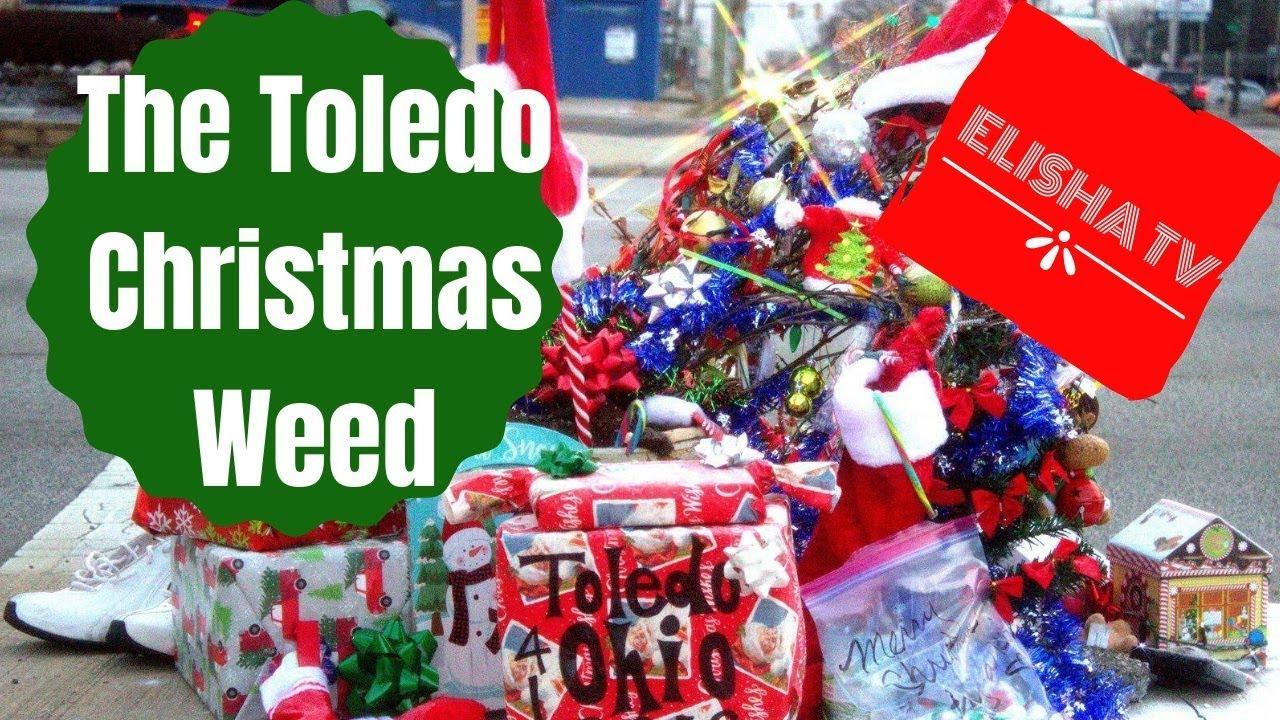 Toledo Christmas Weed.The Toledo Christmas Weed Youtube