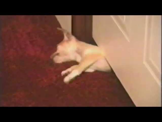 Puppy Reveals Secret Escape Tactics