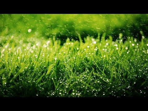 Где взять семена для красивого газона бесплатно