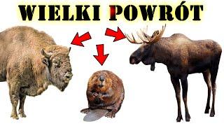 ŻUBR, BÓBR, ŁOŚ to są zwierzęta, które powróciły do Polski
