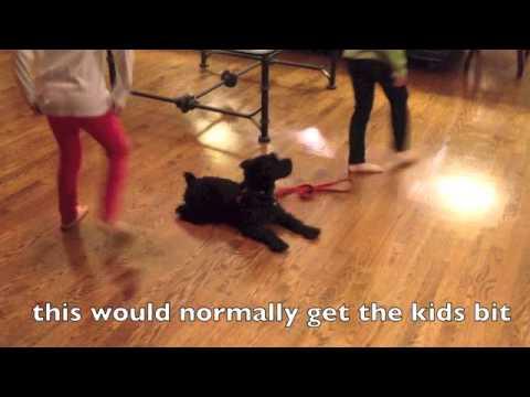 Aggressive dog rehab, no more jumping or biting Solid K9 Training