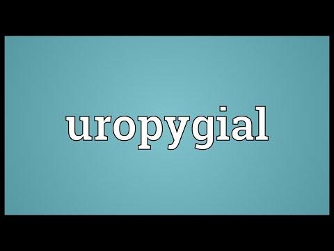 Header of uropygial