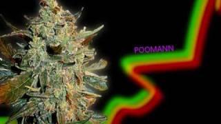 Singjay Phil Harmony feat. Manja - Ein kleiner Sonnenstrahl