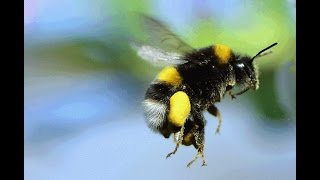 flat earth bumble bee natural law truth hidden in plain sight