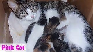 1001 Cách Mèo mẹ bảo vệ Mèo con an toàn .