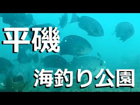 平磯海づり公園 釣り場の水中映像