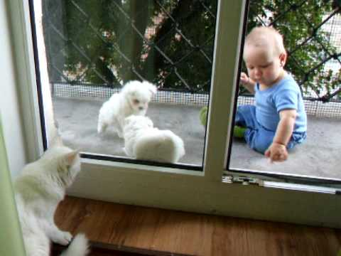 moment on a balcony – baby, maltese puppies and a cat