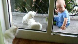 Moment On A Balcony - Baby, Maltese Puppies And A Cat
