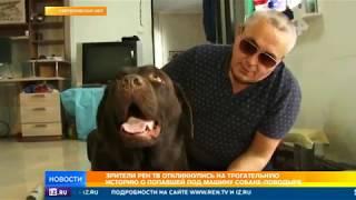 Зрители РЕН ТВ откликнулись на трогательную историю о попавшей под машину собаке-поводыре