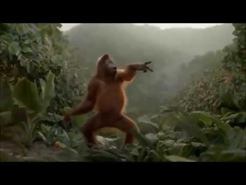 Смешное видео про обезьян