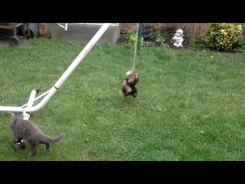 Mozart qui se prend pour un chat