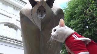 А вы кота согнуть смогли бы из флейты водосточных труб?