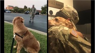 Heartwarming dog Reunions | try not to cry