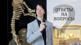 Всё, что вы хотели знать о древних животных. Ярослав Попов