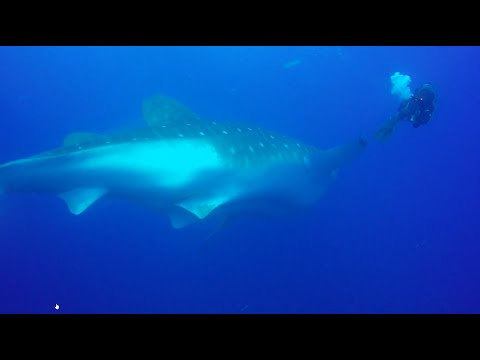 Galapagos Diving - Liveaboard September 2019 (Deep Blue)