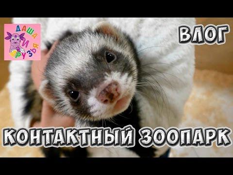 Видео кроликов - Кролики -