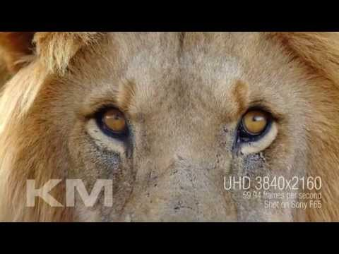 4K (UltraHD) Big Five Africa Footage Trailer
