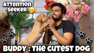 Buddy The Cutest Dog    Funniest Video ❤   Attention Seeker    Dog Lovers  
