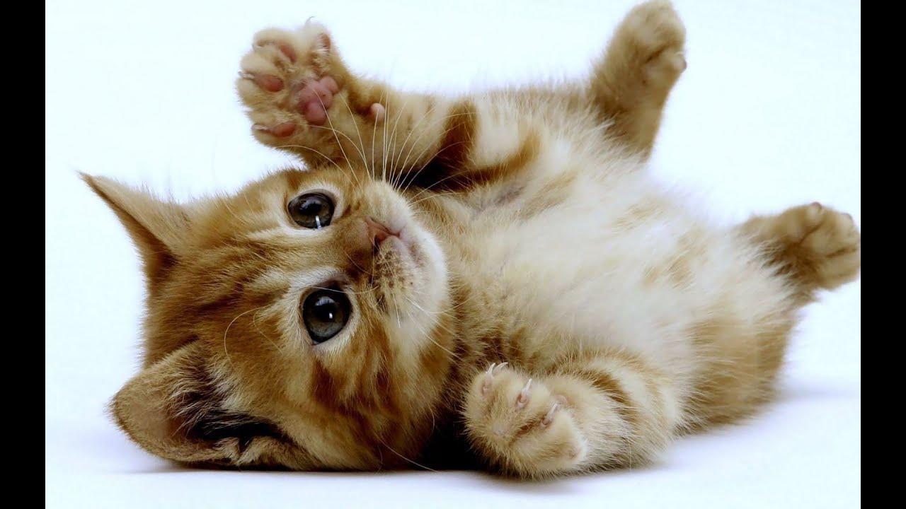 Chat drôle: images et vidéos de chats