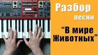 В мире животных - разбор на пианино | кавер - Уроки фортепиано