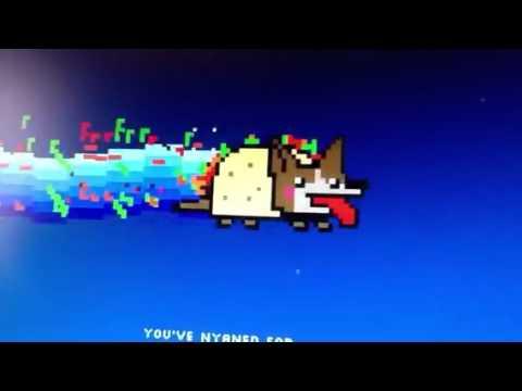 Taco dog Nyan cat - YouTube Nyan Dog