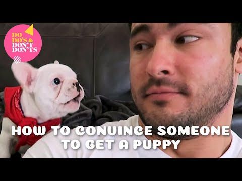 How To Convince Someone to Get a Puppy | Dodo's & Don'tdon'ts