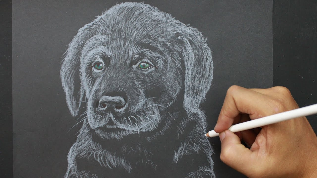 how to draw a dog easy youtube