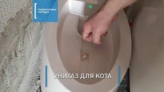 Как сделать унитаз для любимого кота - технология установки