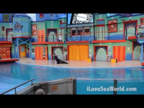 Sea Lion High Premier at SeaWorld San Antonio