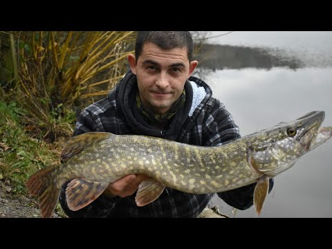 Coarse Fishing In Winter - Pike Fishing Cornwall